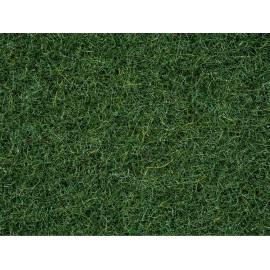 Barstoma pelkių žolė