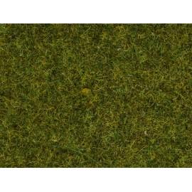 Barstoma pievos žolė
