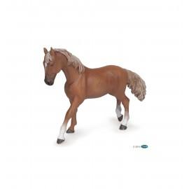 Alezan English thoroughbred mare
