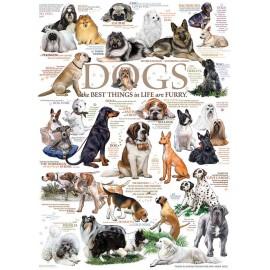 Dog Qoutes