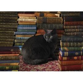 Katė bibliotekoje