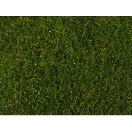 Mišrios pievos žolės danga