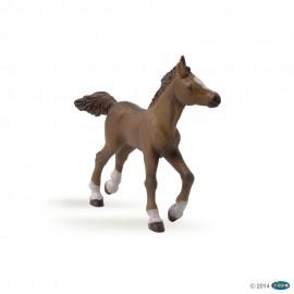 Anglų arabų žirgo jauniklio figūrėlė